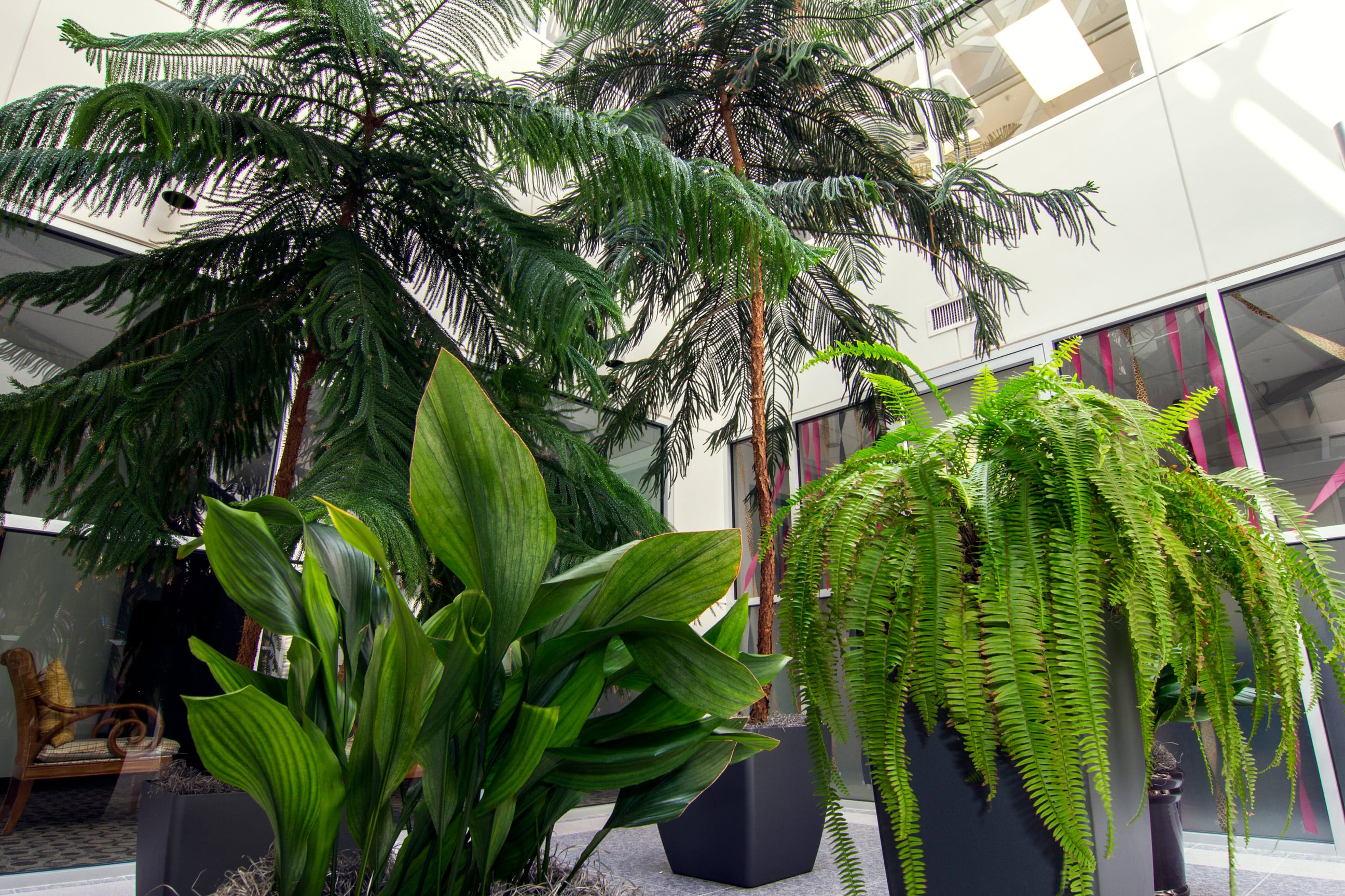 Elegant Interior Plantscapes   Interior Plantscapes, Urban Plantscapes, Holiday  Plants, Green Walls And Green Roofs, Corporate Gifts, Plant Leasing