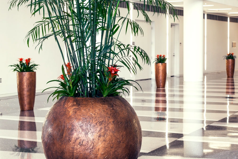Interior Plantscapes   Interior Plantscapes, Urban Plantscapes, Holiday  Plants, Green Walls And Green Roofs, Corporate Gifts, Plant Leasing