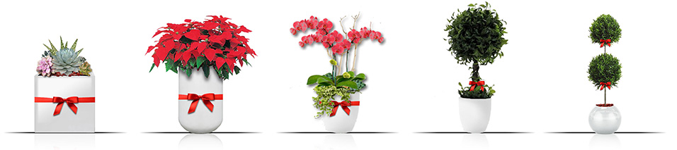 Plant gifts for corporate organizations